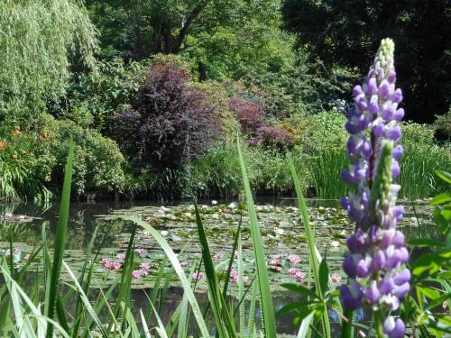 Normandie,jardin Monet,baie de Somme,chez Marylaur 201.JPG