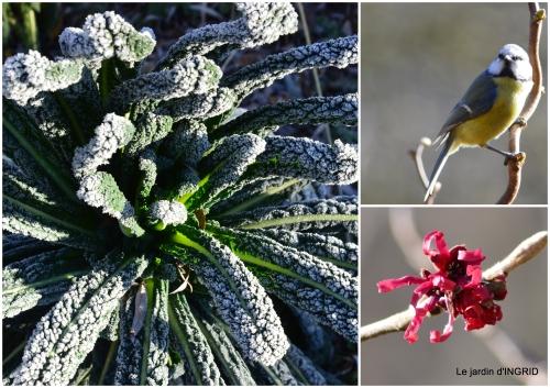2017-01-25 pour les oiseaux,roseraie,enveloppes SOL1.jpg