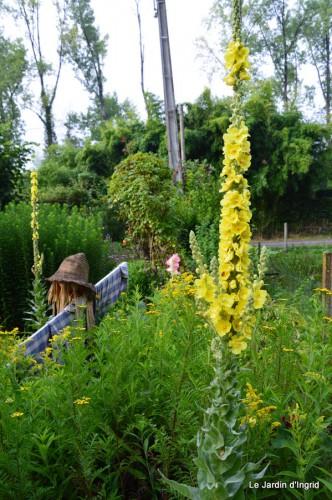 tournesols,pt jardin,nénuphard,libellules,lavande bouquet,carava 033.JPG