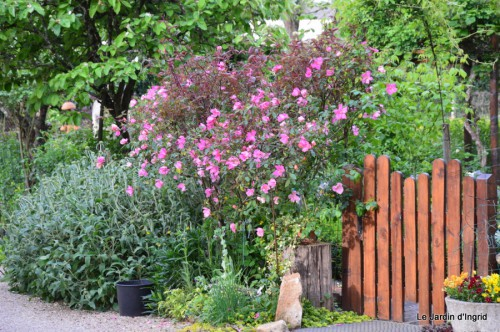 géraniums,glycine Monpazier,cabane,arums,fleurs sauvages 123.JPG