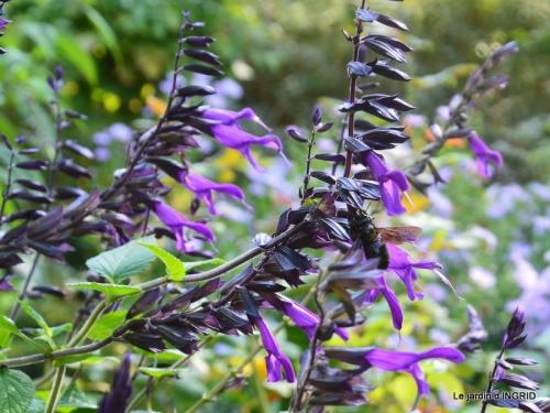 male ancienne,septembre jardin,couronne,bouquet 061.JPG