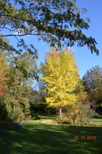 petit érable,le canal et lejardin àl'automne 033.JPG
