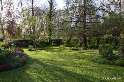 paquerettes,arums,laurier palme,jardin 073.JPG