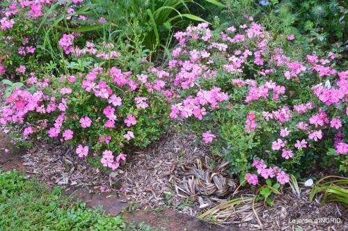 jardin,chez Bernadette,puces,cygnes,pluie 028.JPG