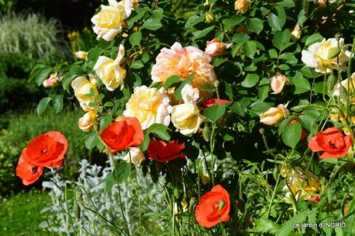 fête de la fraise Vergt,roses jardin 073.JPG