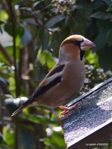 les écorces,troncs,oiseaux ,héllébores 075-001.JPG