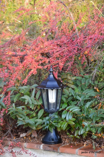 fin de l'automne,Lalinde,bouquet de l'avent 055.JPG