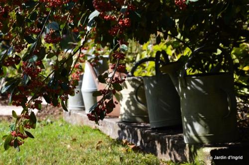 Nicky et Arya,jardin automne 025.JPG