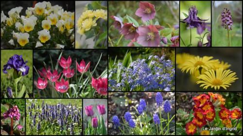 2013-04-05 Beaumont,tulipes,primevères et autres,chez Bernadette7.jpg