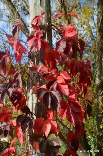 canal automne ,jardin,Ines 076.JPG