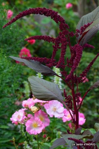 confiture,bouquet,petit jardin 073.JPG