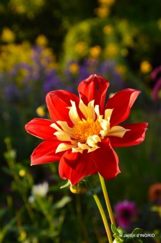 jardin Mme Perichou,grandes fleurs,bouquet,jardin 099.JPG