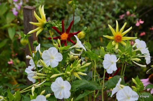 hibiscus,St Marcel,chez Brigitte,chats,jardin,Banes,papillons 149.JPG
