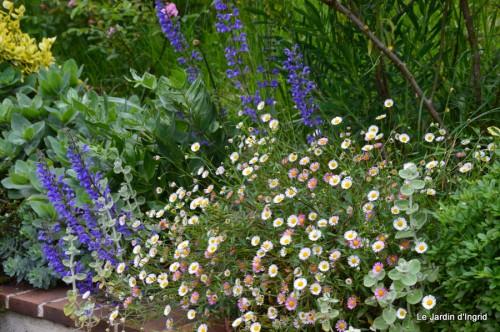 canal,fleurs blanches,marguerites,LE FLEIX,osier 091.JPG