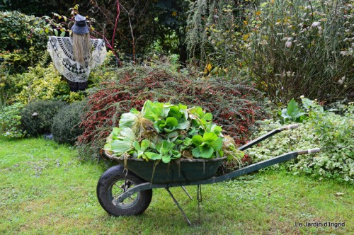 ménage automne,plectanthrus,feuillages 125.JPG