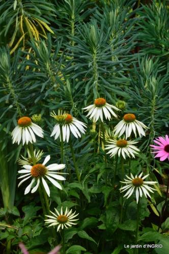 juin jardin,bouquet,sophie 027.JPG