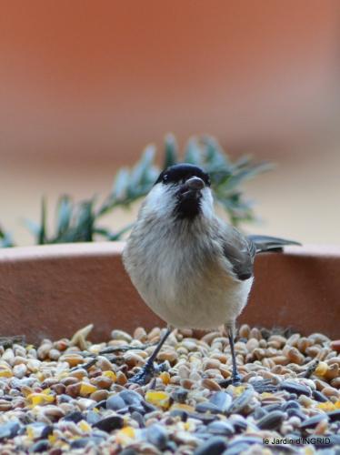 pour les oiseaux,roseraie,enveloppes SOL 006.JPG