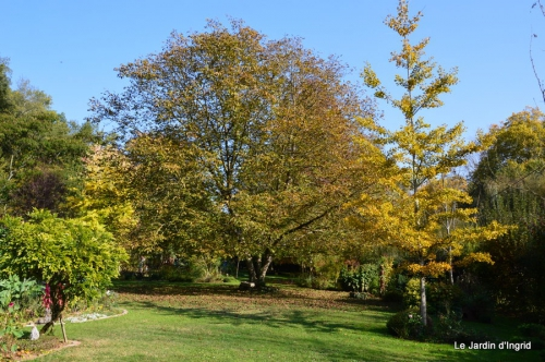jardin automne,Arya avec Nicky 088.JPG