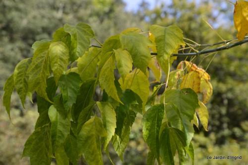 sauges,plectanthrus,Romane,canal,manthe r.,automne 084.JPG
