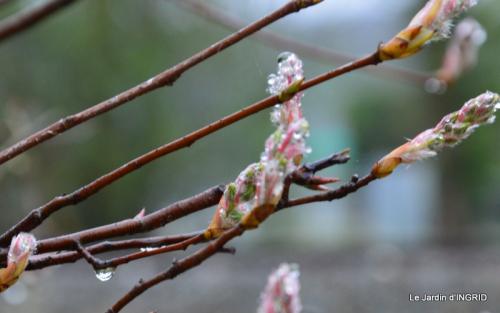 jardin (3 semaine de mars) 058.JPG