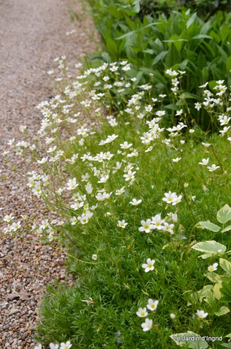 canal,fleurs blanches,marguerites,LE FLEIX,osier 071.JPG