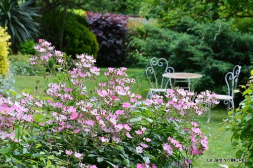 fête de la fraise Vergt,roses jardin 175.JPG