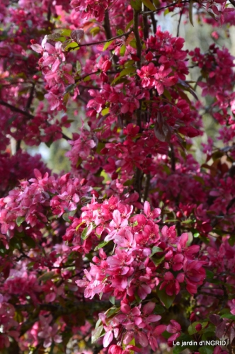 printemps,lilas,tontine 052.JPG
