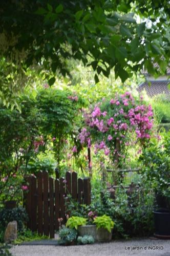 inondation,jardin,oeufs cygnes,chez Nathalie 049.JPG
