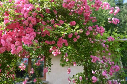 jardin,potager,roses,sauges 099.JPG