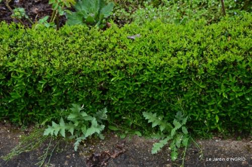 jardin (3 semaine de mars) 066.JPG