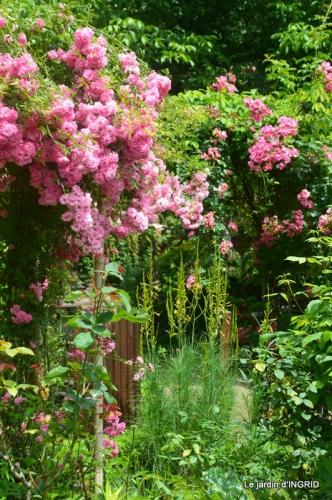 mon jardin,dégats buis, 072.JPG