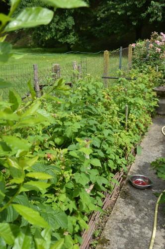 jardin,potager,roses,sauges 071.JPG
