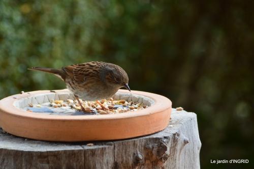 jonquilles,oiseaux avec noix,taille arbres,jardin 101.JPG