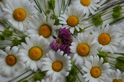 fleurs Beaumont,bouquet,tableau,serre,plants 044.JPG