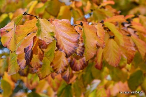 les arbres en automne,cabane 039.JPG