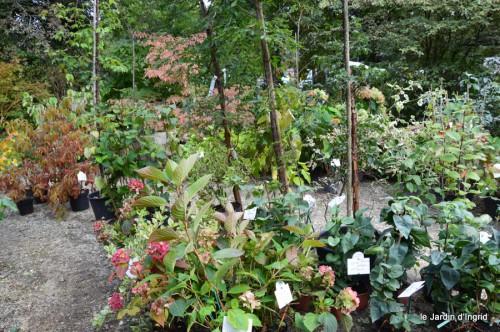 mariage,jardin,la Brande,figues 150.JPG