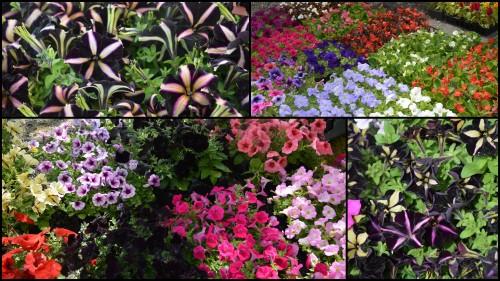 2013-05-01 chateau  Banes,marché fleurs Lalinde4.jpg