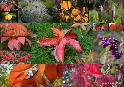 2017-10-01 Neuvic,jardin,champignons canal1.jpg
