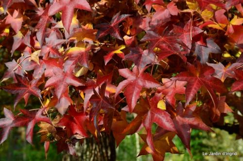 travaux,érable rouge,abeilles,Monpazier,jardin 026.JPG