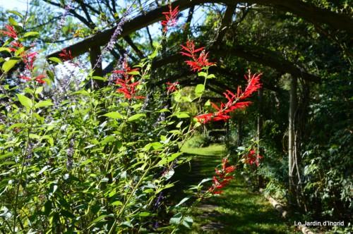 ménage automne,plectanthrus,feuillages 009.JPG