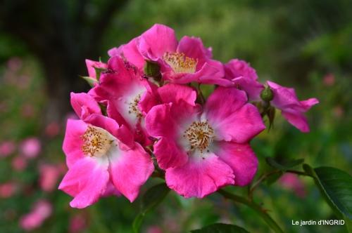 roses,visiteuses,Sophie 040.JPG