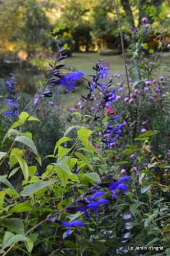 mon coin,Monique,les oies,mon jardin 048.JPG