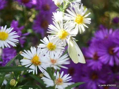 papillons,couleurs d'automne,Bernadette,pluie 017.JPG