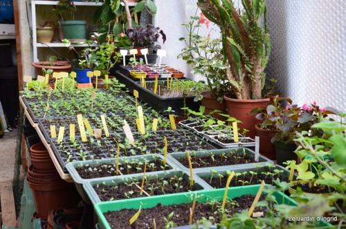 tillandsia,rainette,terreau,jardin 076.JPG
