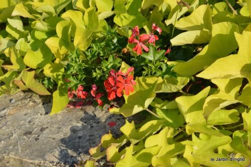 jardin,fruits,Caro,papillons,manthe religieuse,Lalinde 075.JPG