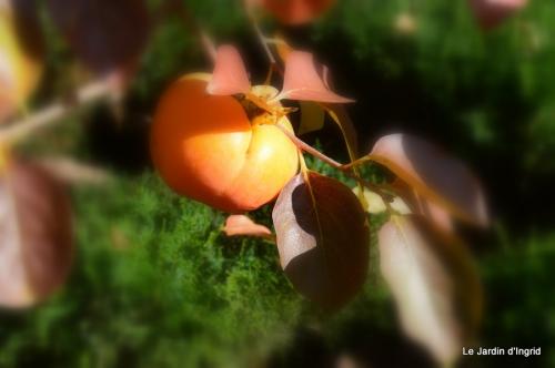 jardin automne ,travaux feuilles 002.JPG