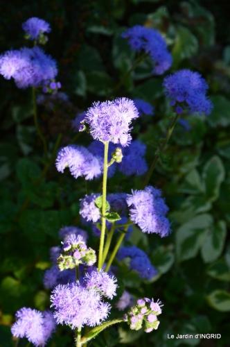 albizia,bouquet,plantes  en A 047.JPG