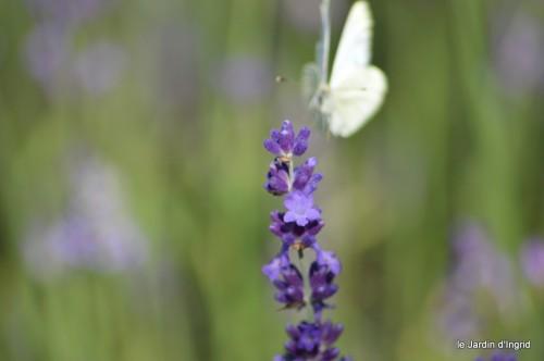 coeur des fleurs,papillons,libellules 173.JPG