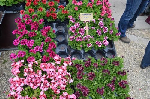 CADOUIN,cascade,iris,roses,fl.sauvages 051.JPG