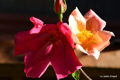 géraniums,glycine Monpazier,cabane,arums,fleurs sauvages 040.JPG